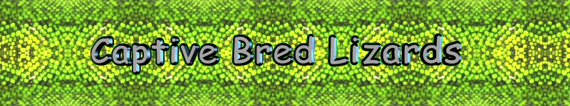 captive bred lizards logo